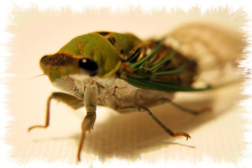 giant green bug