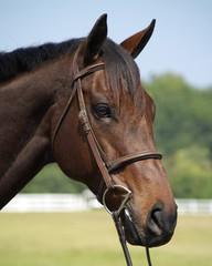 pete horse