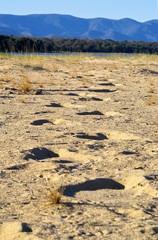 elephant footsteps