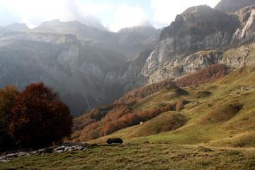 automne au pas d'aspe (réf 371x03)