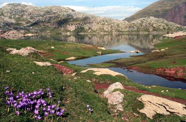 lac d'estaëns et crocus