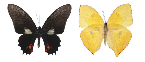 colorful butterflies over a white background.
