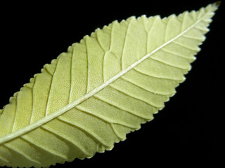back of a leaf