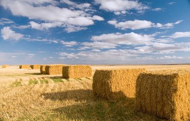 square hay bales