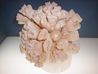 coral from grand caymen islands