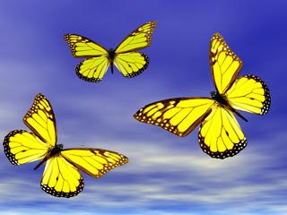 butterflies in fight