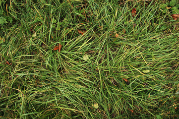 autumn grass texture
