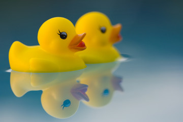 adventurous yellow ducks