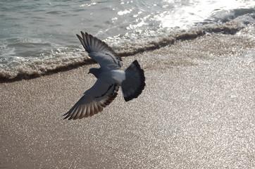envol d oiseau