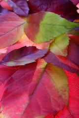 autumn leaves backgrounds