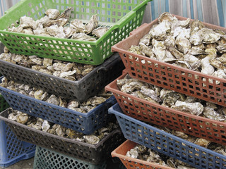 oysters for sale sea food