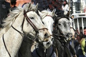 chevaux 009