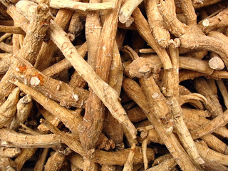 ginseng roots from chinese herbal pharmacy