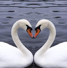 Foto op Canvas Zwaan swans heart