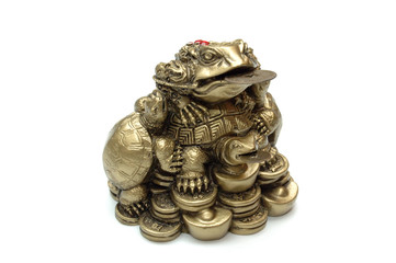 feng shui chinese frog with coins. isolated.