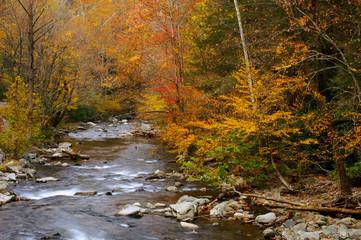 autumn stream alpha
