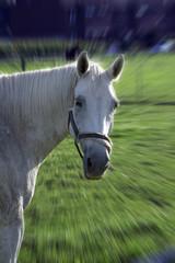 abstrakter pferdekopf