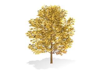 arbre et feuilles jaunes d'automne