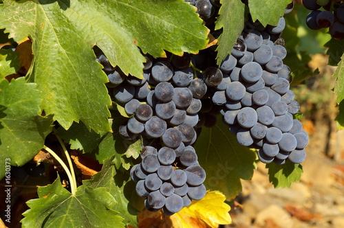 grappes de raisin rouge et feuilles de vigne photo libre de droits sur la banque d 39 images. Black Bedroom Furniture Sets. Home Design Ideas