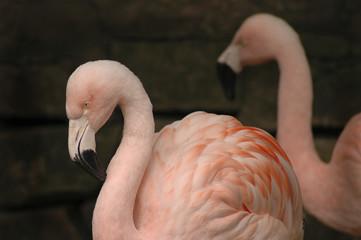 Wall Murals Flamingo flamingo 2