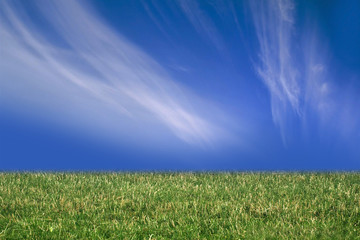 grass and blue sky with clouds