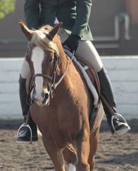 pony28
