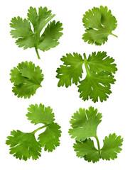 parsley (cilantro)