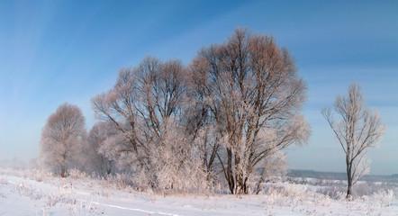 frosty day.