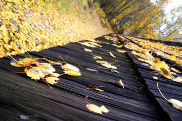 roof, autumn landscape