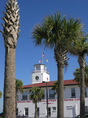 palm tree and tower