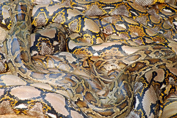 python pile