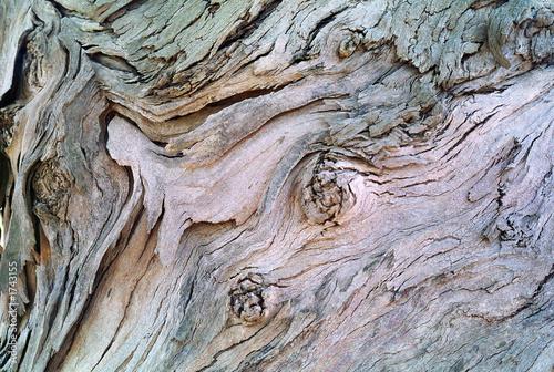 Wall mural eukalyptus baum
