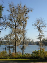 dead tree at lake