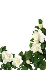 magnolia border