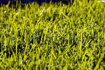 grass in sun