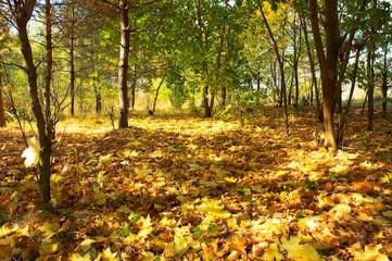 autumnal carpet