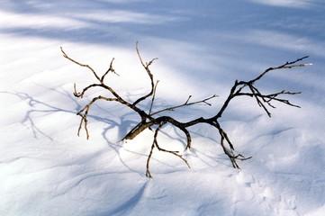 winter twig in snow