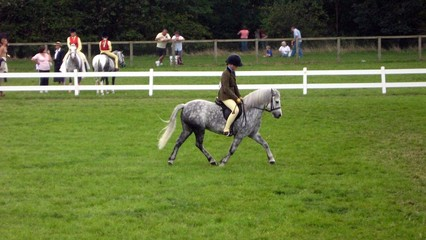 girl/ athletics riding horse. equestrian.