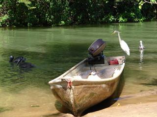 retour de pêche à samana