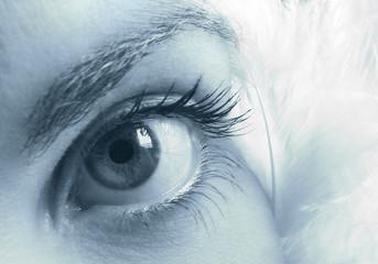 mirada azulada entre plumas