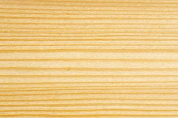 detail of cut tree -spruce tree