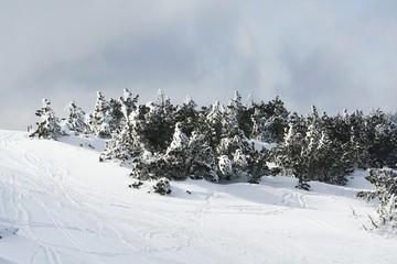 paysage de neige 030