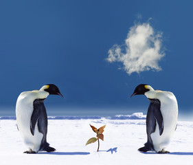Photo sur Toile Pingouin global warming
