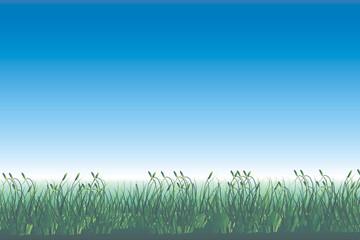 sommertag - gras vor blauem himmel