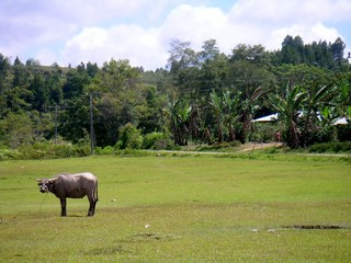 Naturaleza en Sumatra ( Indoensia, Asia)