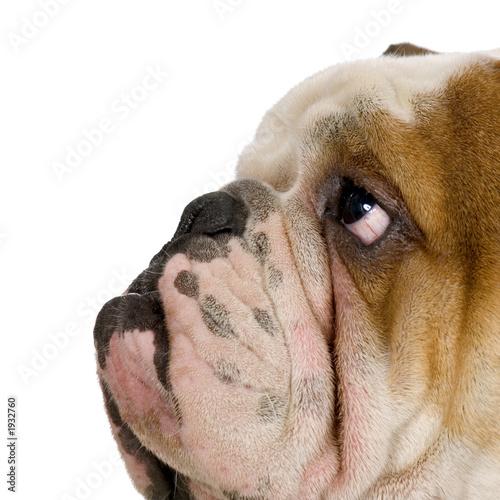 Пес в туалете скачать