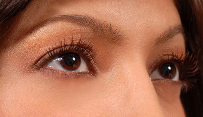 closeup of attractive woman's brown eyes