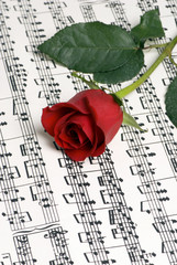 rose music 3