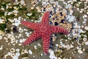 starfish and crab make friends