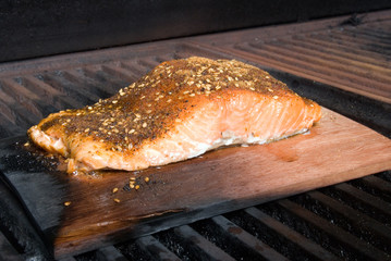 salmon fillet on cedar plank smoke cooking on bbq